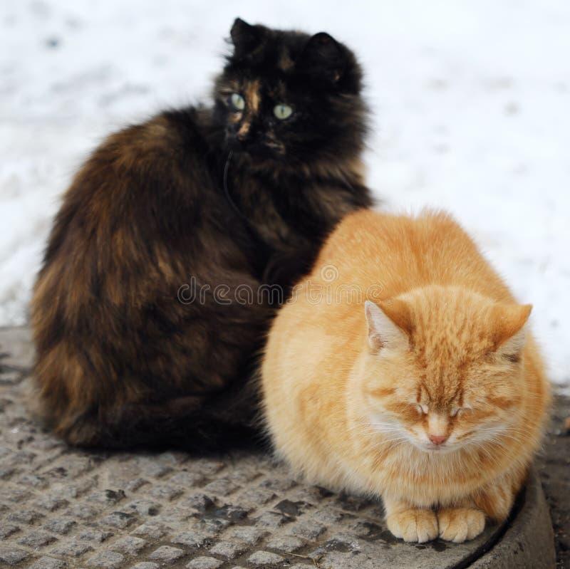 Härliga katter svärtar och rävaktig färg på gatan i vinter royaltyfri foto