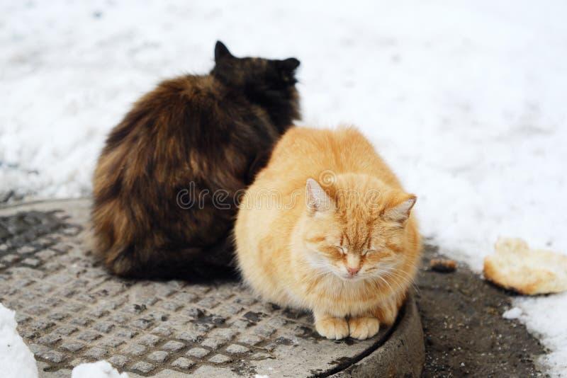 Härliga katter svärtar och rävaktig färg på gatan i vinter royaltyfria bilder