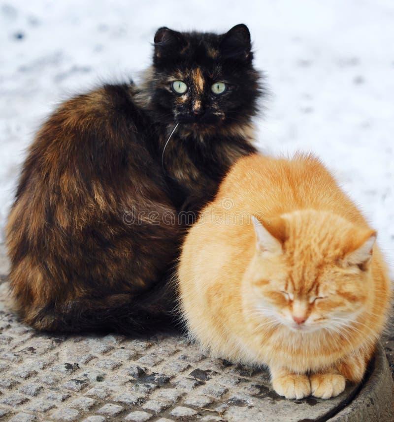 Härliga katter svärtar och rävaktig färg på gatan i vinter royaltyfri bild