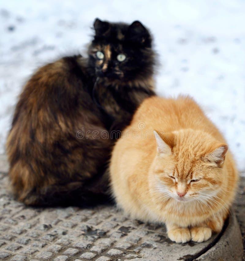 Härliga katter svärtar och rävaktig färg på gatan i vinter arkivbilder