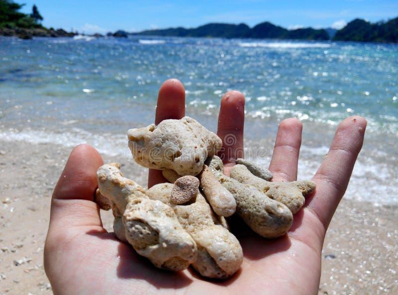 Härliga koraller royaltyfri fotografi