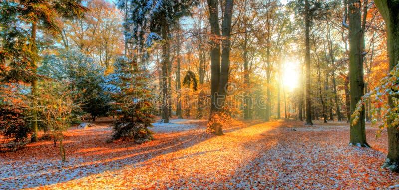 Härliga kulöra träd i hösten, landskapfotografi royaltyfri bild