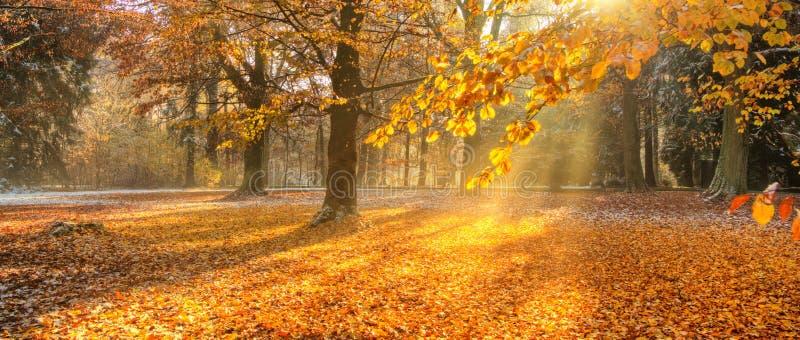 Härliga kulöra träd i hösten, landskapfotografi arkivfoto