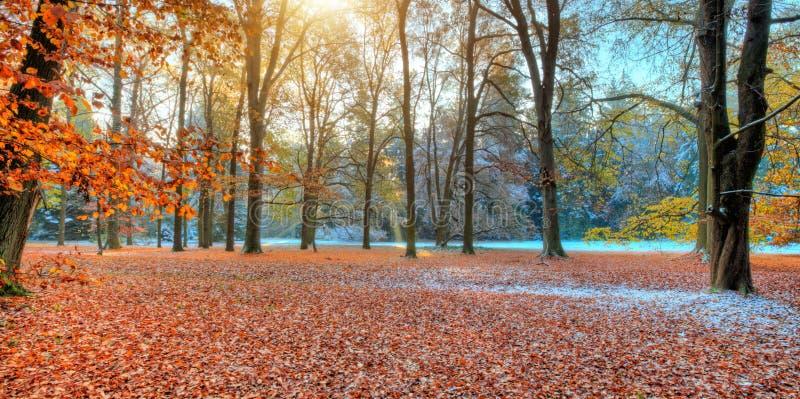 Härliga kulöra träd i hösten, landskapfotografi arkivbilder