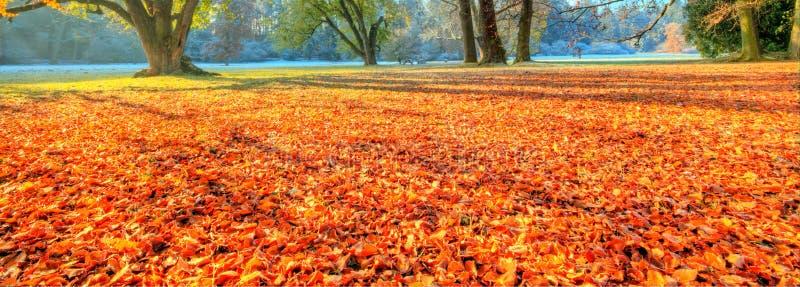 Härliga kulöra träd i hösten, landskapfotografi royaltyfri foto