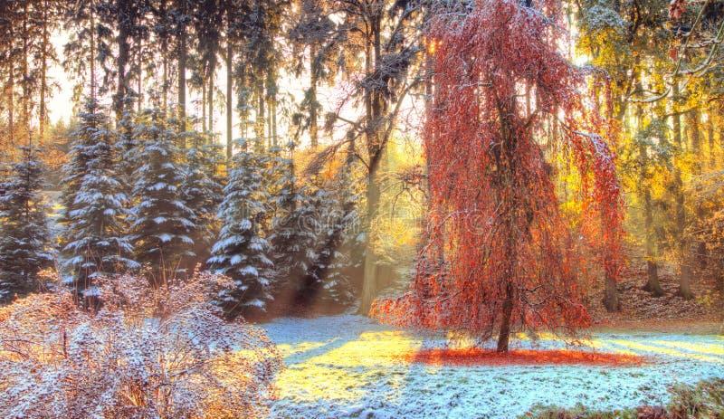 Härliga kulöra träd i hösten, landskapfotografi arkivbild