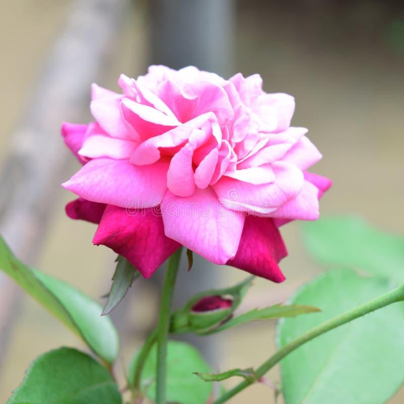 Härliga lösa blommor eller vildblommor royaltyfri foto