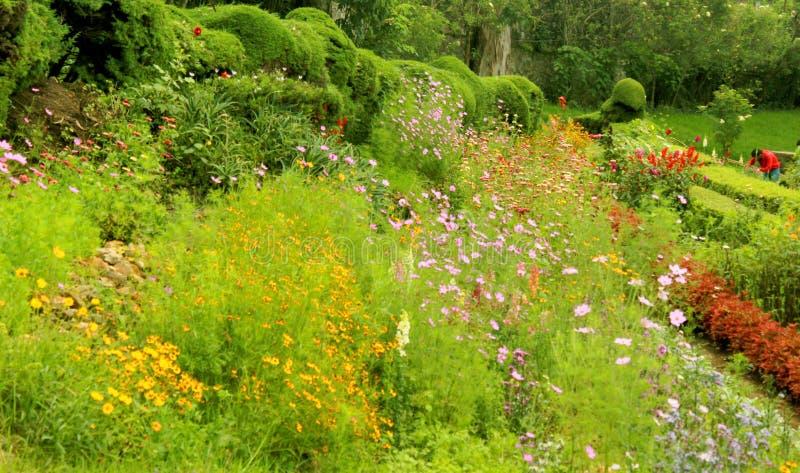 Härliga lösa blommor och dekorativa växter i den chettiar kodaikanalen parkerar royaltyfri fotografi