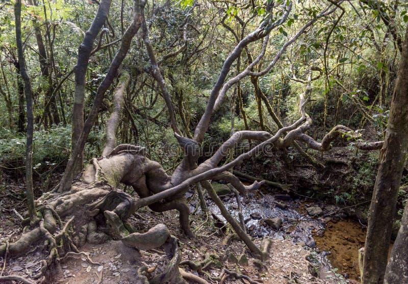 Härliga lösa träd nära dammet i den tropiska skogen arkivfoton