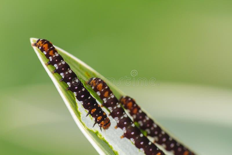 Härliga larver i en barnkammare arkivfoton