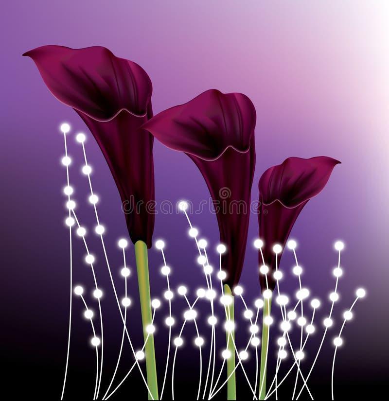 Härliga liljor för svart calla på purpurfärgad lutningbakgrund vektor illustrationer