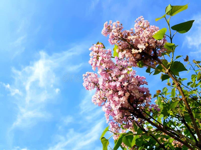 Härliga lilor över blå himmel royaltyfria bilder