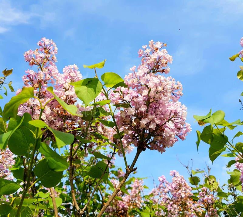 Härliga lilor över blå himmel arkivbild