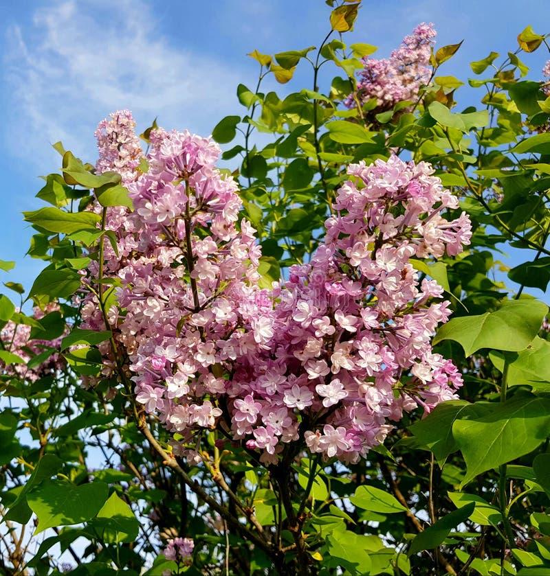 Härliga lilor över blå himmel royaltyfri fotografi