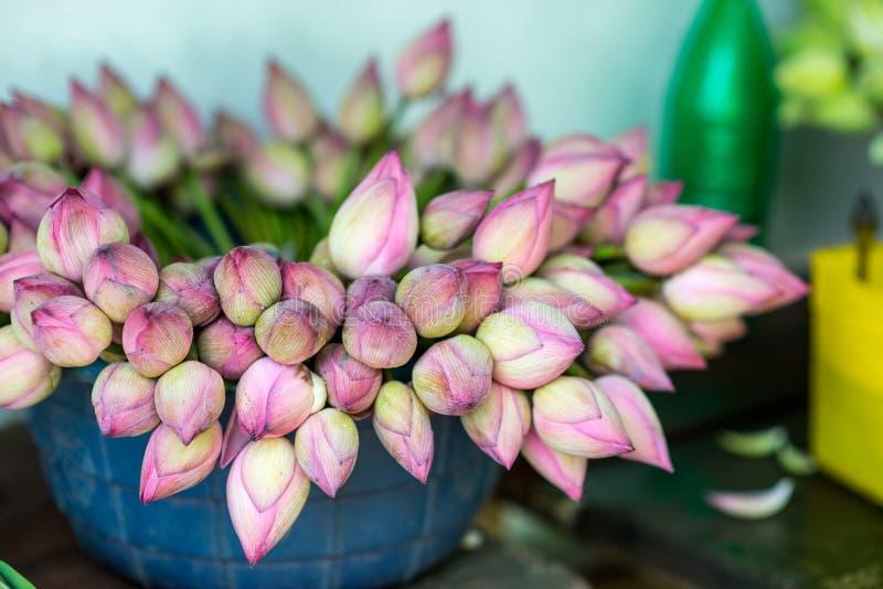 Härliga lotusblommablommor arkivfoto