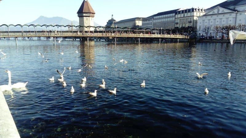 Härliga Lucerne royaltyfria bilder