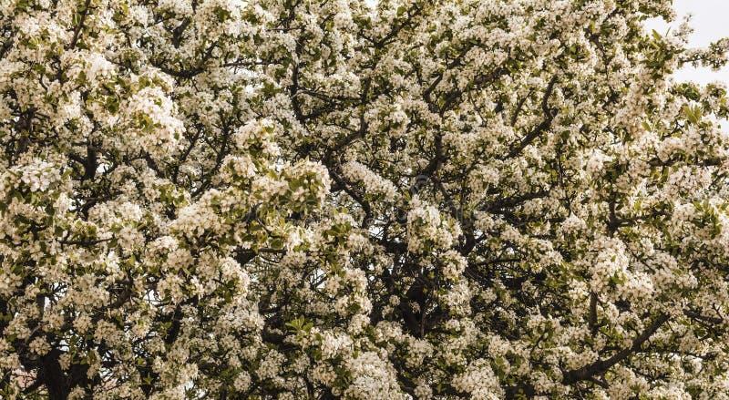 Härliga mandelvinterblommor arkivbilder