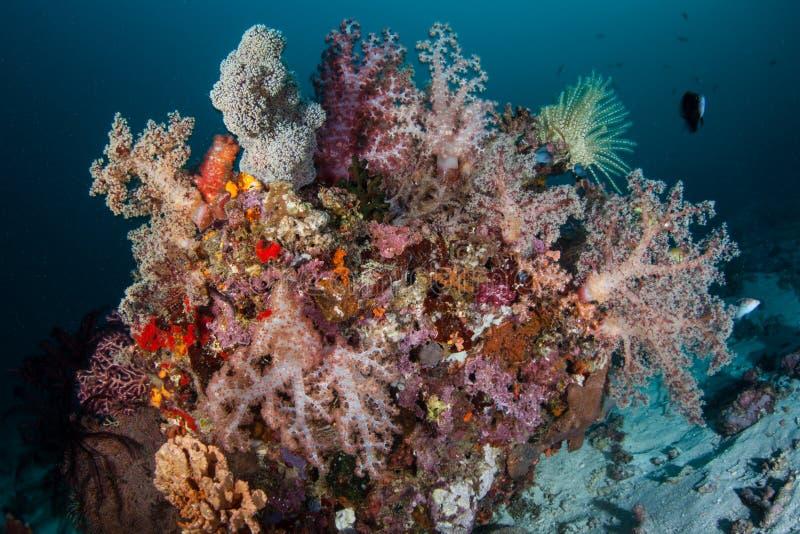 Härliga mjuka koraller växer på den djupa reven arkivfoto