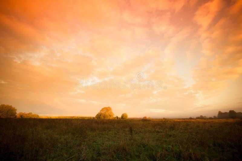 Härliga moln över fältet nära skogsommaren tonat royaltyfria bilder