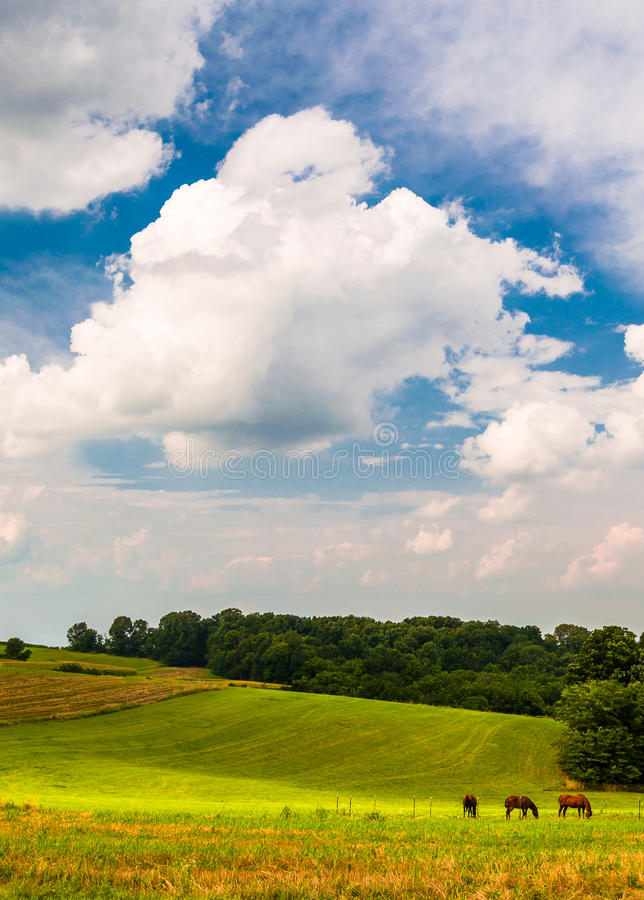 Härliga moln över hästar i ett lantgårdfält i sydliga York Co royaltyfria bilder