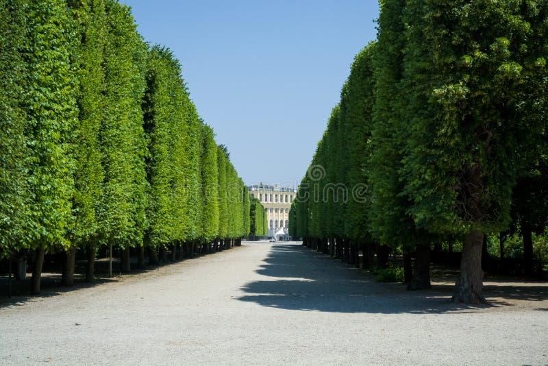 Härliga och breda vandringsled bland gräsplaner och en dekor i parkerar i sommaren Tr?dg?rd tr? royaltyfri foto