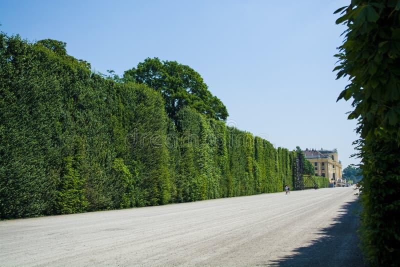 Härliga och breda vandringsled bland gräsplaner och en dekor i parkerar i sommaren Tr?dg?rd tr? royaltyfria bilder