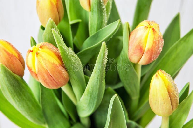 Härliga orange tulpan med dagg, bukett av snittblommor royaltyfri bild