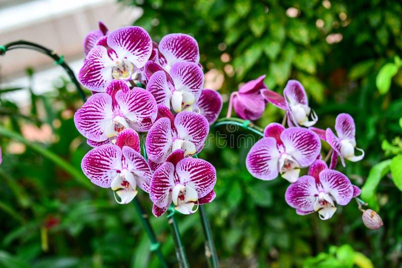 härliga orchids arkivfoto