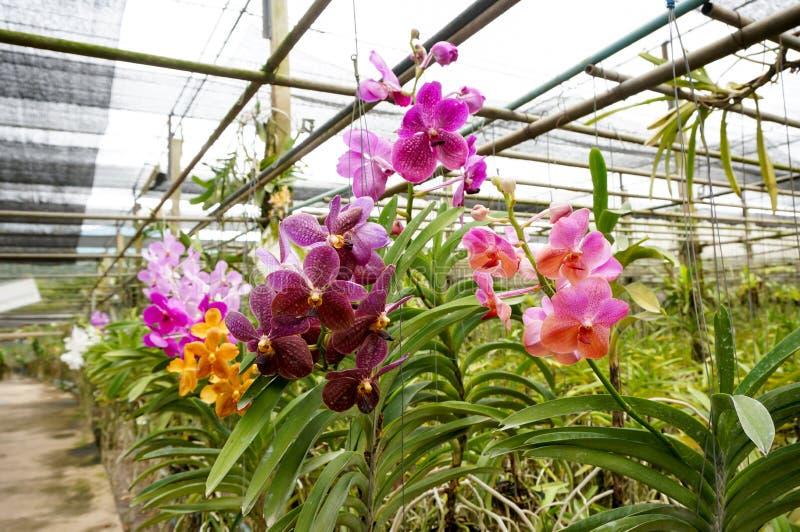 Härliga orkidér i lantgård arkivbild