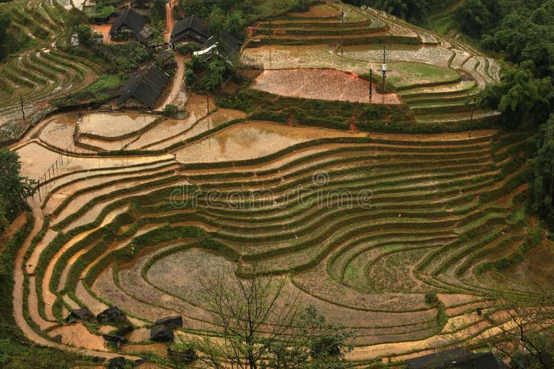 Härliga ovala cirklar av risfält i Lao Chai, Sa-PA, Vietnam arkivfoton