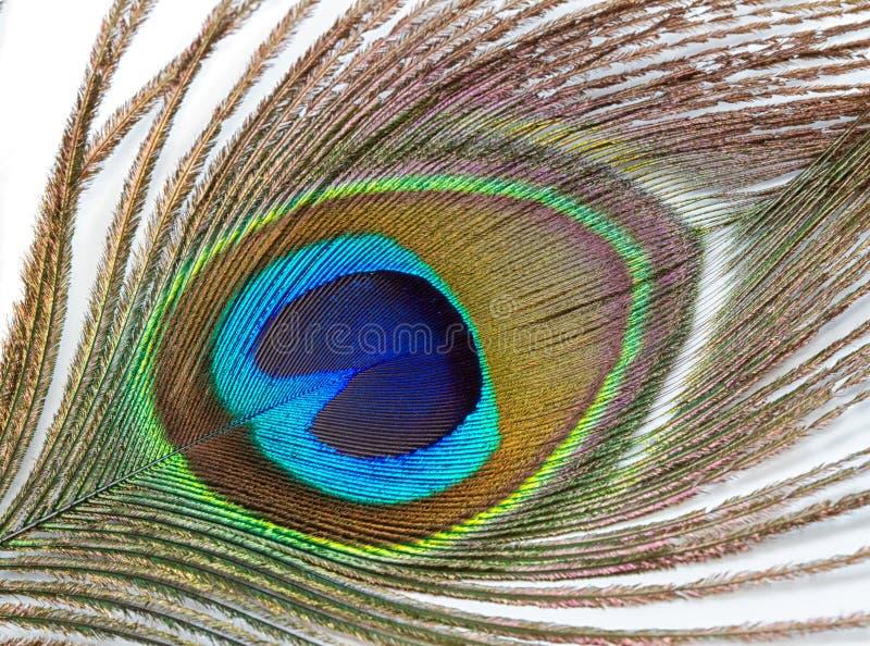 Härliga påfågelfjädrar arkivbild