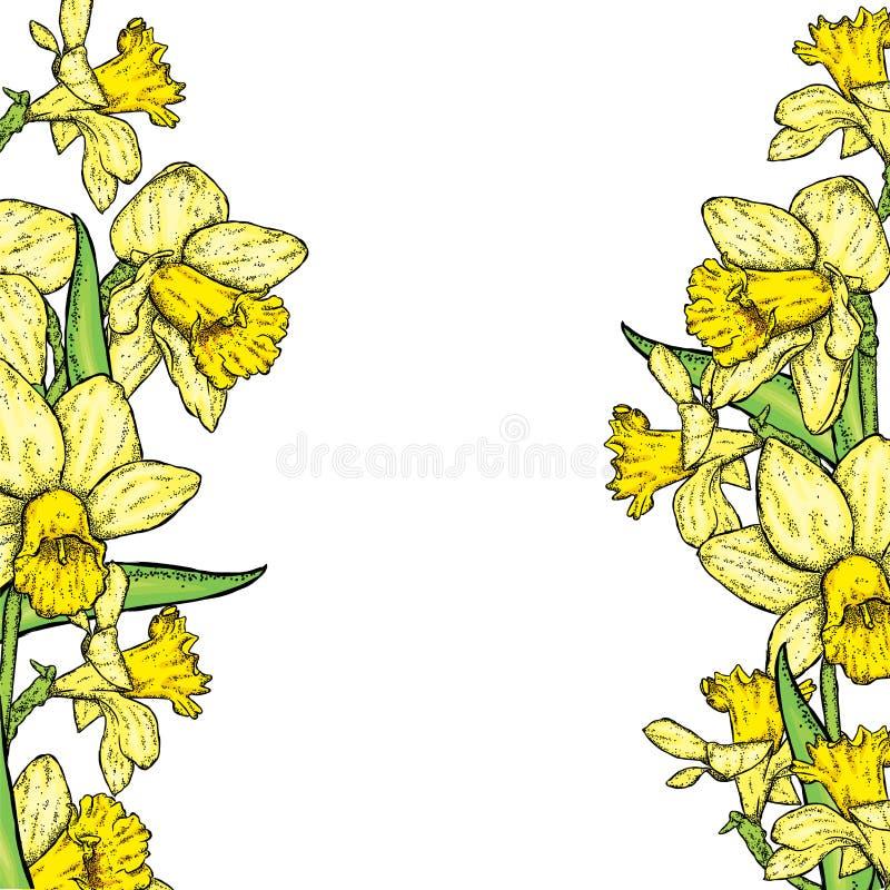 härliga påskliljar också vektor för coreldrawillustration buketten blommar fjädern royaltyfri illustrationer