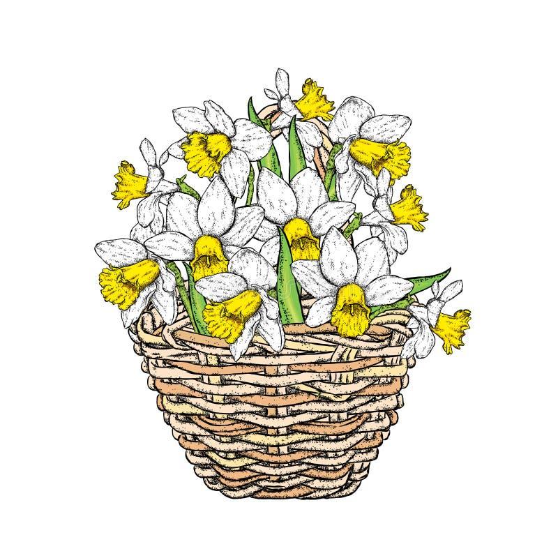 Härliga påskliljor i en vide- korg också vektor för coreldrawillustration pingstlilja buketten blommar fjädern royaltyfri illustrationer