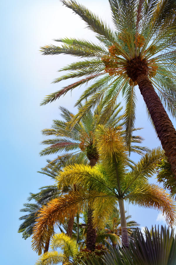 härliga palmträd royaltyfria bilder