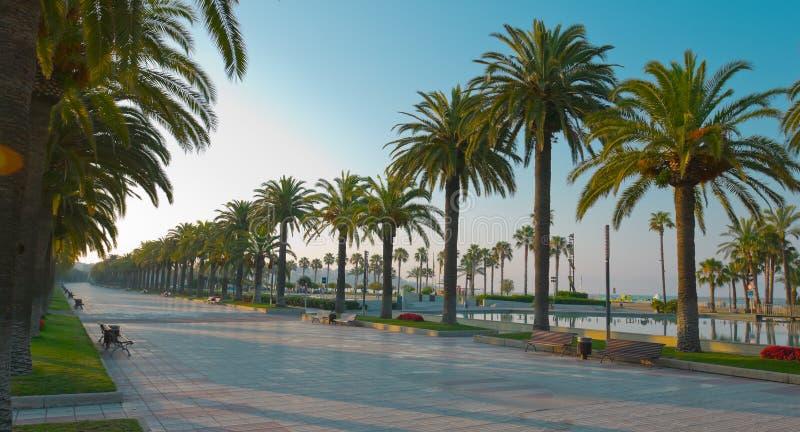 Härliga palmträd gränd, Salou, Spanien, Europa royaltyfri fotografi
