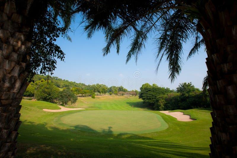 Härliga palmträd i golfbana. royaltyfri bild