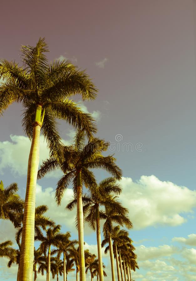 Härliga palmträd på blå himmel, tappningstil fotografering för bildbyråer