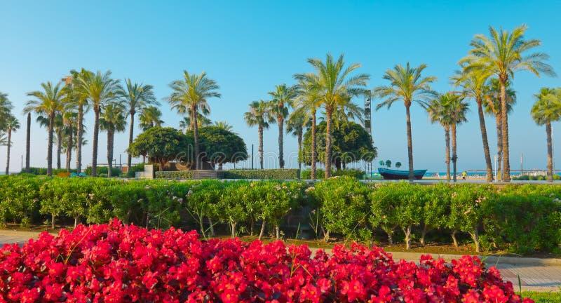 Härliga palmträd, Salou, Spanien royaltyfria bilder