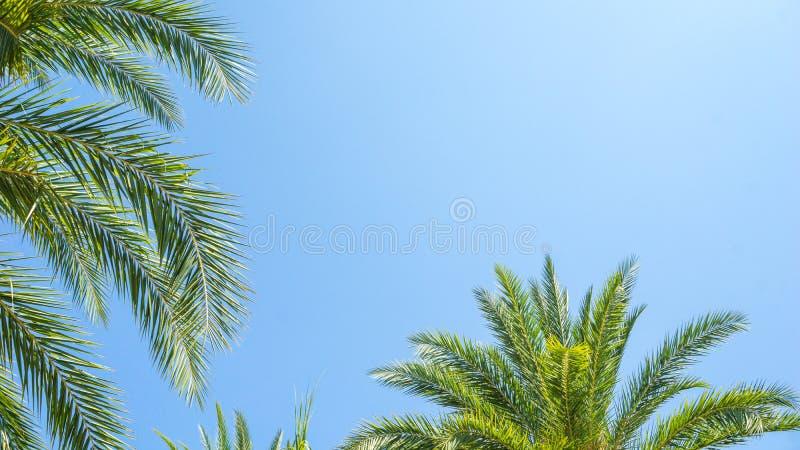 Härliga palmträdtjänstledigheter med utrymme för blå himmel och kopierings, bruk för sommar och strandinnehåll arkivbilder