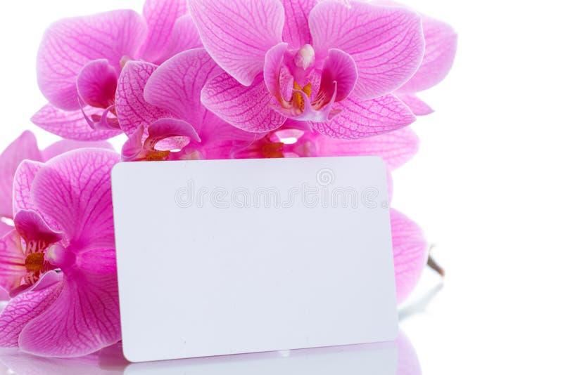 Härliga purpurfärgade phalaenopsisblommor royaltyfria bilder
