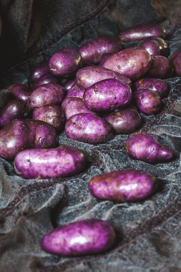 Härliga purpurfärgade potatisar tvättas på grått tyg arkivfoton