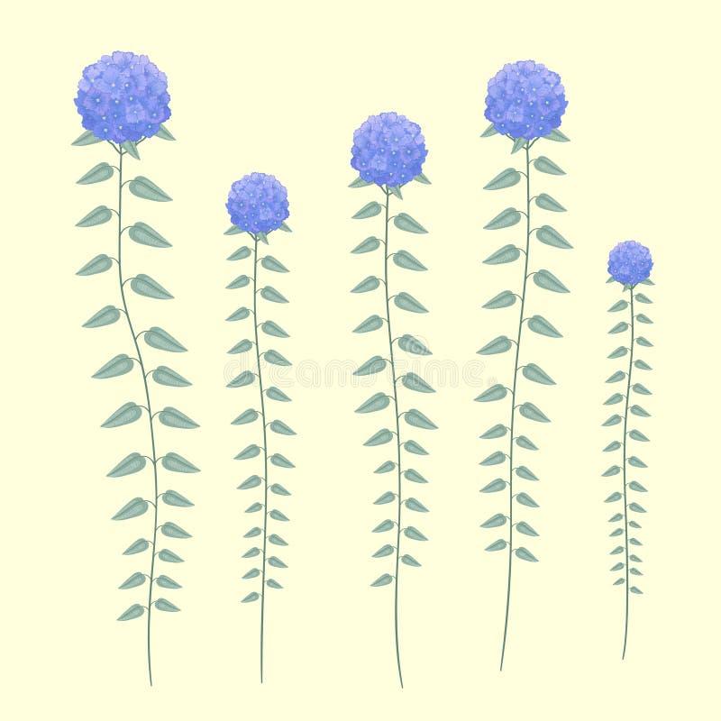Härliga purpurfärgade vanlig hortensiablommor ställde in isolerat på retro grön bakgrund stock illustrationer