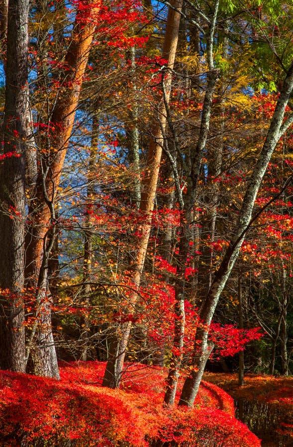 Härliga röda lövverksidor i höstskogen royaltyfri fotografi