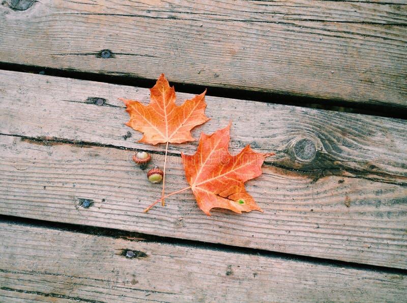 härliga röda orange lönnlöv och två gröna ekollonar som ligger på gammal träplankabakgrund arkivbild