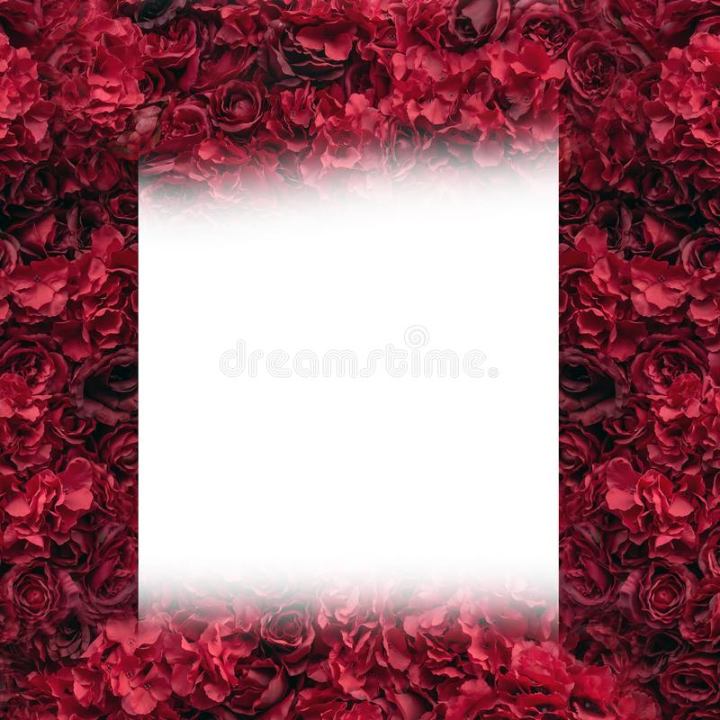 härliga röda ro Blommavägg Närbild av enorma röda rosor placera text royaltyfri illustrationer