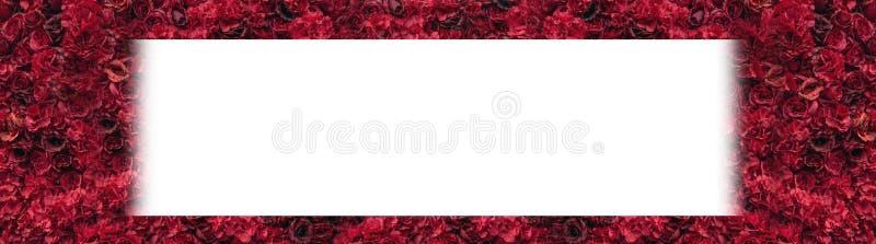 härliga röda ro Blommavägg Närbild av enorma röda rosor placera text vektor illustrationer