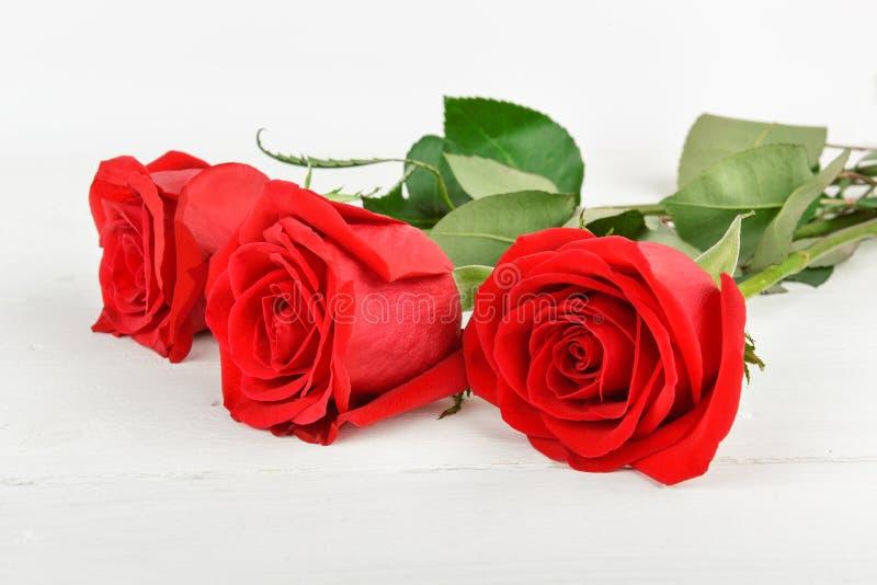Härliga röda rosor på en vit träbakgrund Fritt utrymme för royaltyfria foton