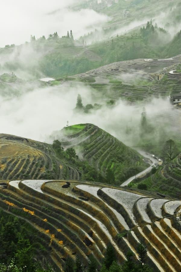 Härliga ris terrasserar i Kina dimmigt höstlandskap med ris arkivbild