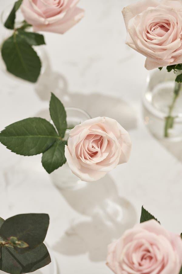Härliga rosa blommor i vas på rosa bakgrund Hälsningkort för dag för kvinnor dag eller moder royaltyfri foto