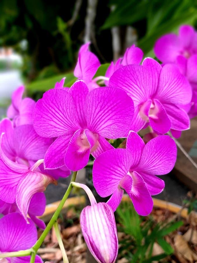 Härliga rosa färgblommor royaltyfri foto